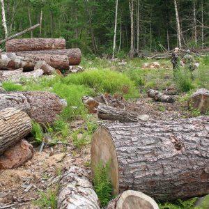 10 каруци с крадени дърва засякоха в Дъскот, Димча и Недан