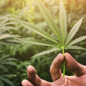 Наркодилър ще работи 180 часа за обществото по решение на съд в Хага