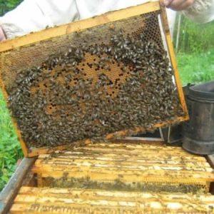Областта стана предпочитана за номадско пчеларство, стопани алармират за евентуален риск от зараза по насекомите