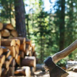 Разкрити три кражби на дърва при акция в Павликенско