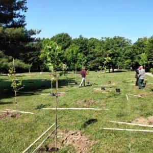 """Засадиха 66 чинара в чест на 66 бебета, родени с помощта на програма """"Инвитро"""" на Община Велико Търново"""